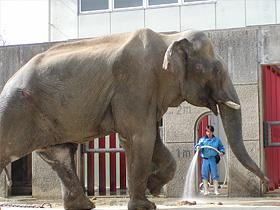 インドゾウ:太郎の昔話