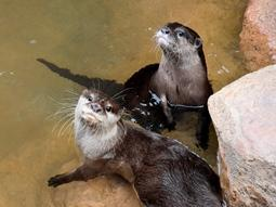 World Otter Dayイベント