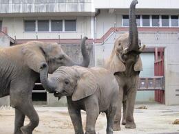 ゾウのお宅訪問
