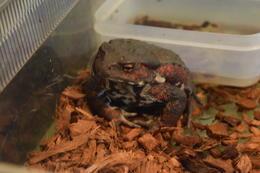日本のカエルを見てみよう