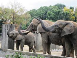 世界ゾウの日イベント