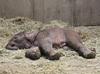 6月1日元気なアフリカゾウの女の子が誕生しました