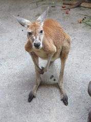 アカカンガルーのジャン(♂・4歳)とギニアヒヒのキチ(♀・23歳)が死亡しました。