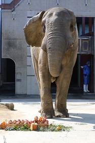 アフリカゾウ アフの死亡原因について